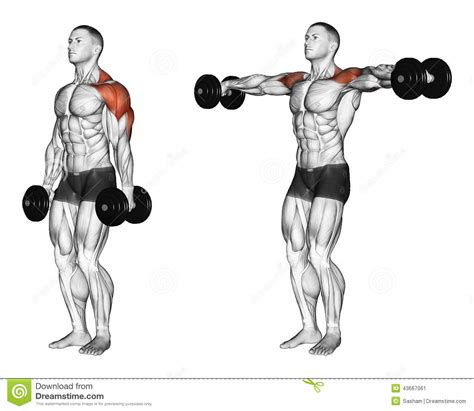 posterior shoulder pain bench press exercising lifting dumbbell in hand download from over