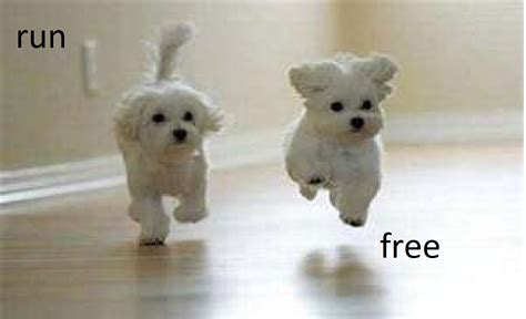 free puppy run free dogs photo 28247568 fanpop