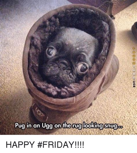 happy friday pug 25 best memes about pug in an ugg pug in an ugg memes