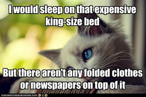 Cat Problems Meme - animal memes first world cat problems how am i supposed