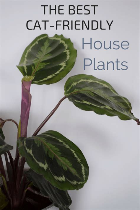 house plants safe for cats a guide to the prettiest cat safe non toxic house plants