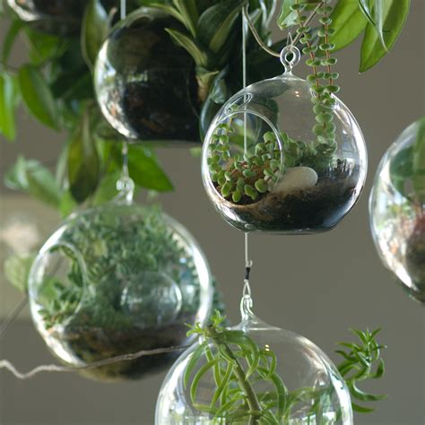 hanging glass planters roots in rust unique planters terrariums home accessories essential tips for the