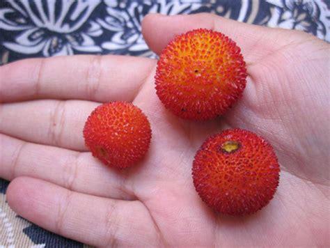 l fruits l arbouse fruit arbouse bio arbouse bio