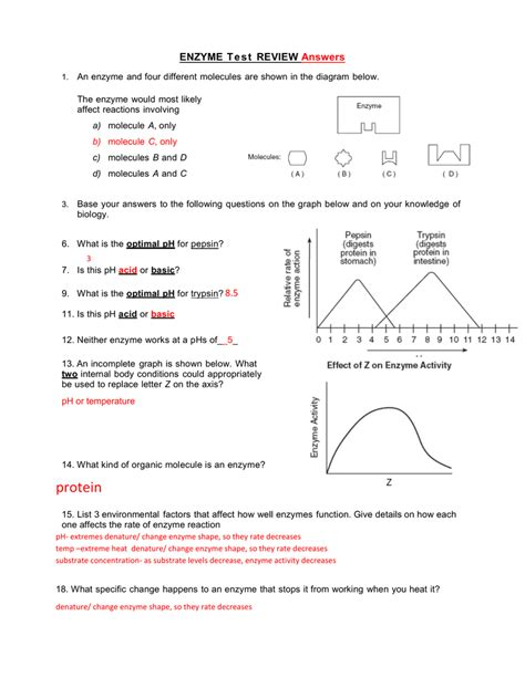 enzyme graphing worksheet db excelcom