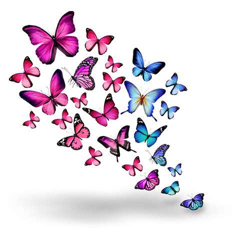 wallpaper iphone 6 butterfly 彩色蝴蝶素材 图片素材 编号 20131107074312 其它类别 背景花边 图片素材 淘图网 taopic com