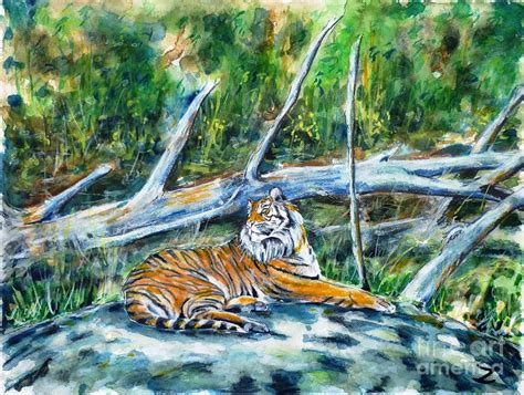 painting zoo sumatran tiger at point defiance zoo painting by zaira