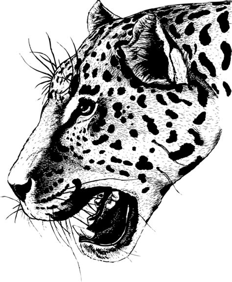 domain leopard image the graphics free vector graphic leopard portrait vectorized
