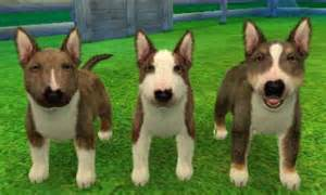bull terrier colors bull terrier nintendogs wiki fandom powered by wikia