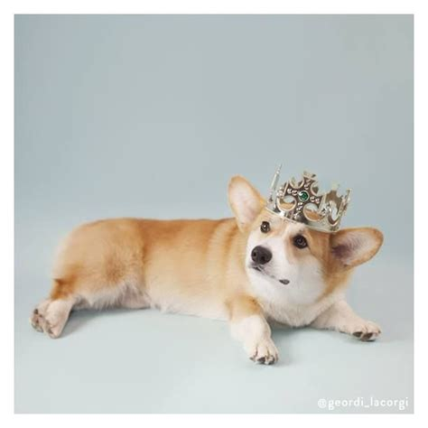 feeling the corgi nation the 1446 best pet costums images on parakeets