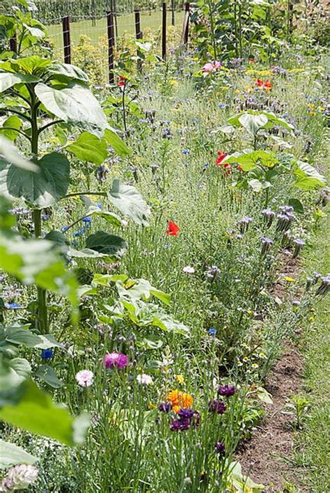 vegetable garden border ideas vegetable garden border ideas photograph bloemen border