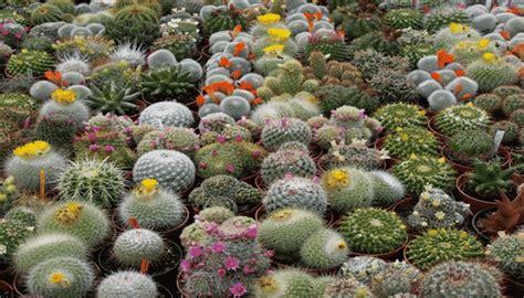 decorar jardin con plantas deserticas plantas desierto naturaleza tropical crea tu propio