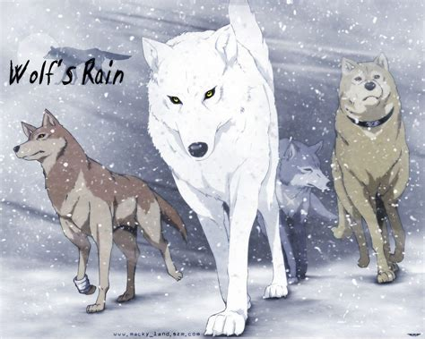 lobo wallpapers wallpaper cave wolfs rain wallpapers wallpaper cave
