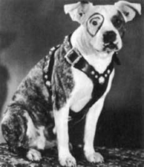 lil rascals puppies petey the pup stubbydog