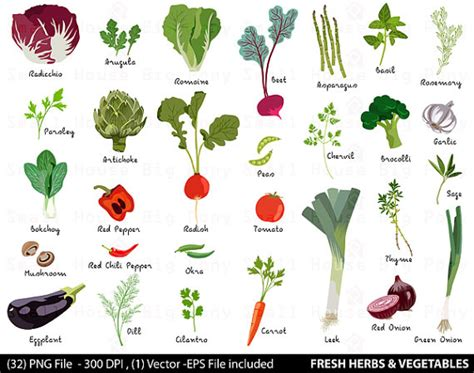 vegetable digital clipart fresh herbs clipart vegetable clip
