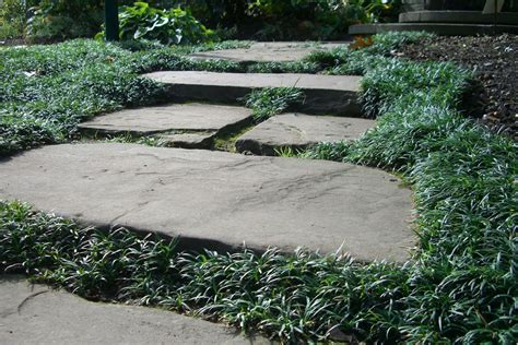 Patio Grass by Mondo Grass Indiana Gardening Web Articles