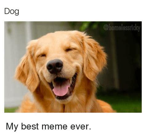 Best Dog Memes - 25 best memes about best memes ever best memes ever memes