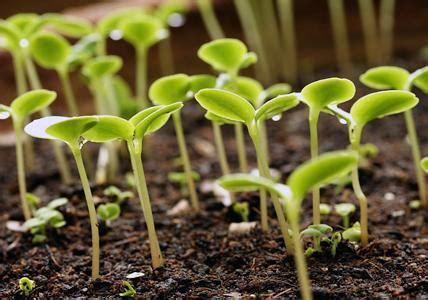 Garten Und Pflanzen 2307 by Garten Im Fr 252 Hling Saisonale Gartentipps Living At Home