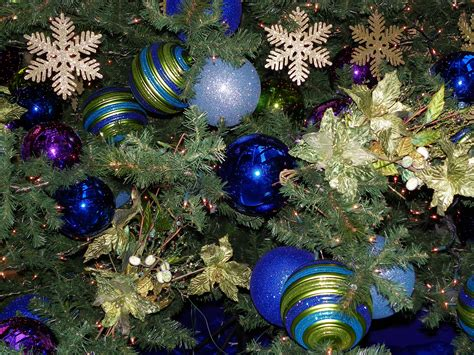 free images branch holiday blue fir decor christmas