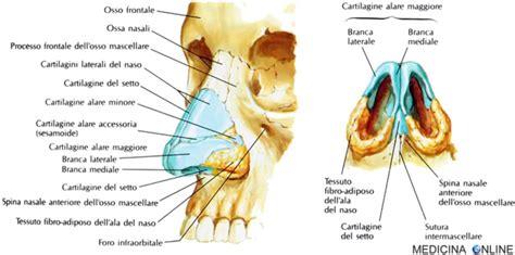 anatomia interna corpo umano naso esterno anatomia funzioni ossa com 232 fatto
