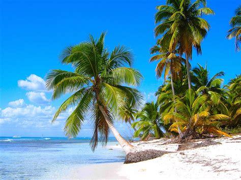 wallpaper  caribbean shore scenery sandy beaches coconut trees sea hd background