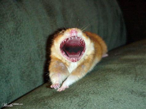 hamster teeth related keywords hamster teeth long tail keywords keywordsking