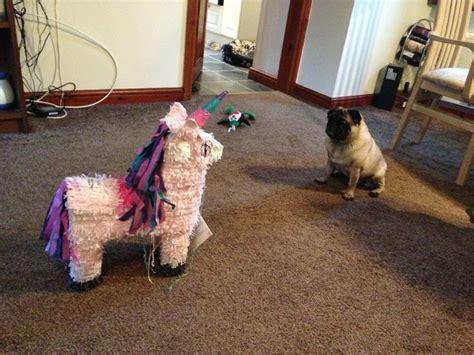 pug pinata 104 best images about unicorns pegasus on shawn and gus unicorn shirt