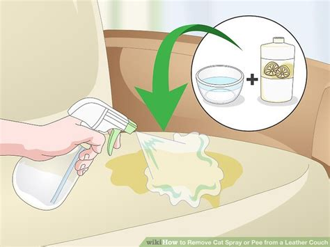 remove cat pee from couch how to remove pet urine from leather sofa sofa