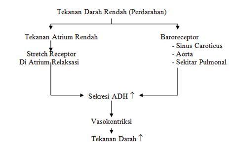 livestock hormon adh antidiuretic hormone