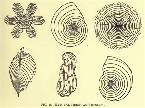 growth pattern in nature the golden spiral is reproduced in many natural gross