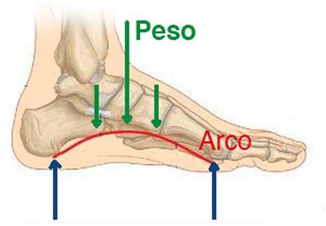 dolore arco plantare interno el pie humano como esta dise 241 ado oscar gonzalez masana