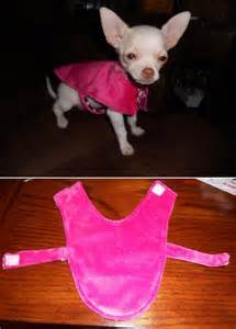 Top 10 Cute Pet Clothes DIY