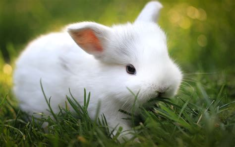 cute rabbit hd wallpaper rabbit wallpapers hd pictures one hd wallpaper pictures