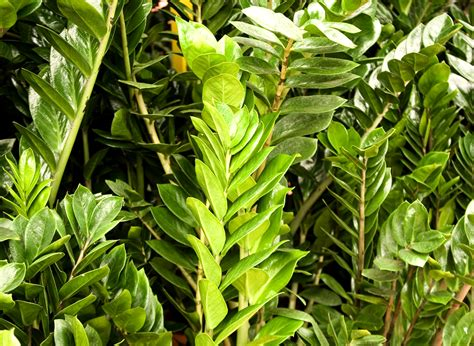 agréable Plante D Interieur Facile D Entretien #1: 1f1atm0yitwgk804k4gkwg8kg-source-11798896.jpg