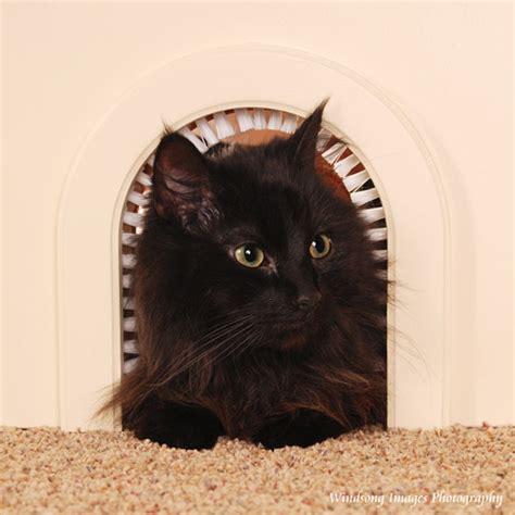 Pet Doors For Cats by Cat Pet Door Cat Furniture Walmart