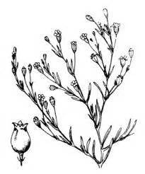 Flower Drawings Free - 1000 images about baby s breath 183 gypsophila on pinterest