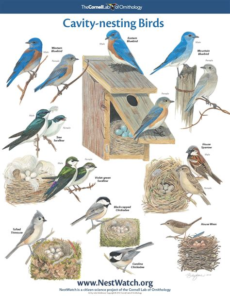 pictures of different bird nests on animal picture society