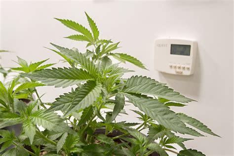 cannabis  humidity   fundamentals  grow room