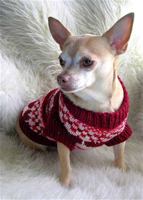 dog coat pattern for chihuahua free crochet dog clothes pattern crochet and knitting