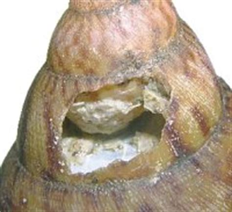 Exposure Is And Shell Promptly Tell You Its Skin Cancer | broken chipped shell snail problems