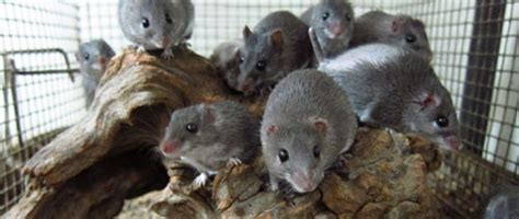 Rats Shed by Wattlab Malcolm Maden The Astonishing Healing