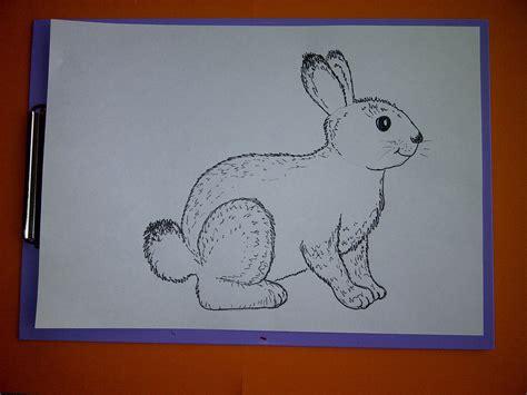 Wie Malt Einen Hasen zeichnen lernen f 252 r anf 228 nger wie malt einen hasen