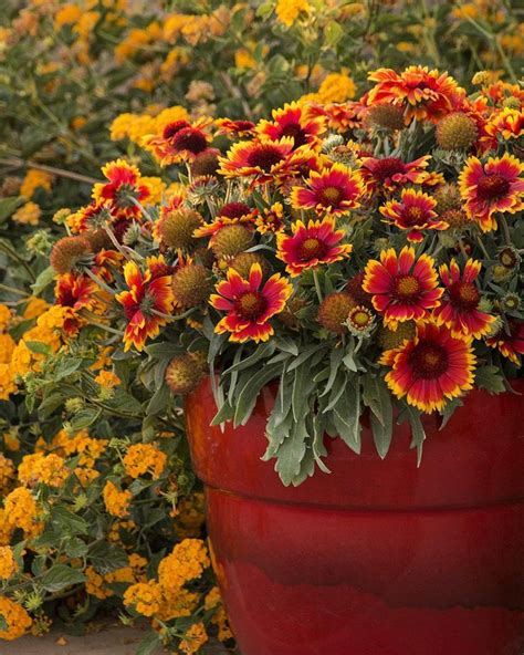 flower garden catalogs 126 best shades of images on monrovia
