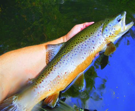 rivers of restoration trout unlimited s first 50 years of conservation ebook uncategorized twin cities trout unlimited