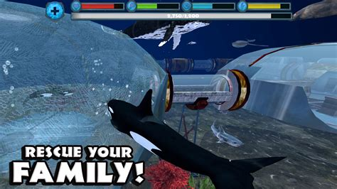 wale gane orca simulator android apps on google play