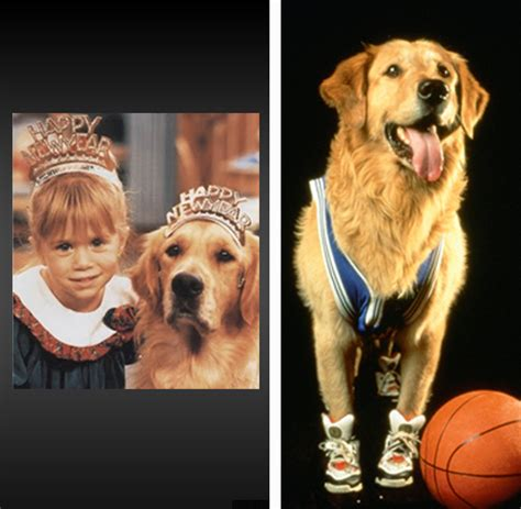 comet full house full house fans images comet from full house wallpaper and background photos 36402979
