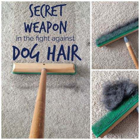 how to get dog hair out of car upholstery my secret weapon that picks up more dog hair school of