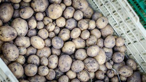 Kartoffeln Richtig Lagern 4999 by Kartoffeln Richtig Lagern Phlora De