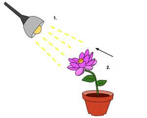 what is the definition of light phototropism