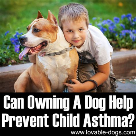 can dogs asthma lovable dogs can owning a help prevent child asthma lovable dogs