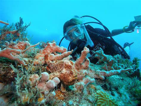 marine biology with odyssey datz marine biologist